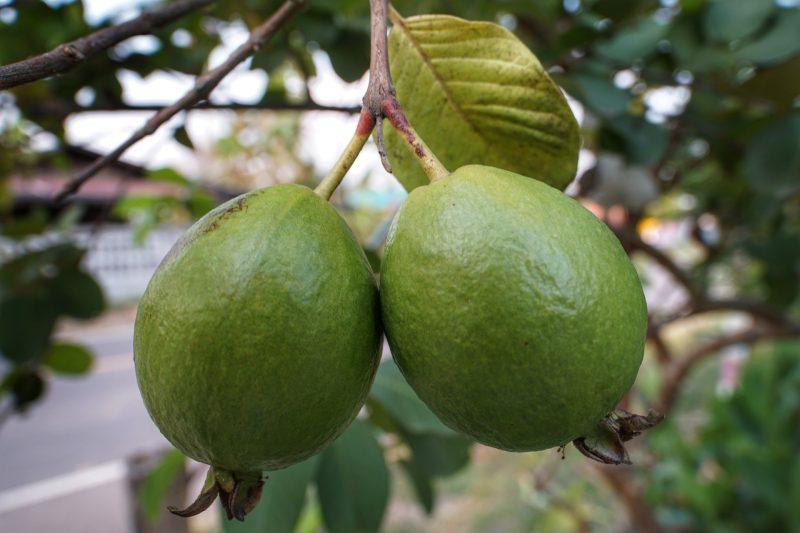 Guava Rosa Biologico Siciliano