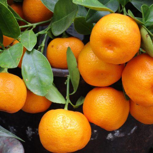 Mandarini Siciliani Biologici