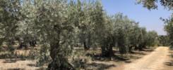 Agricoltura Biologica in Sicilia