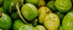 Guava Frutto Tropicale Medicinale